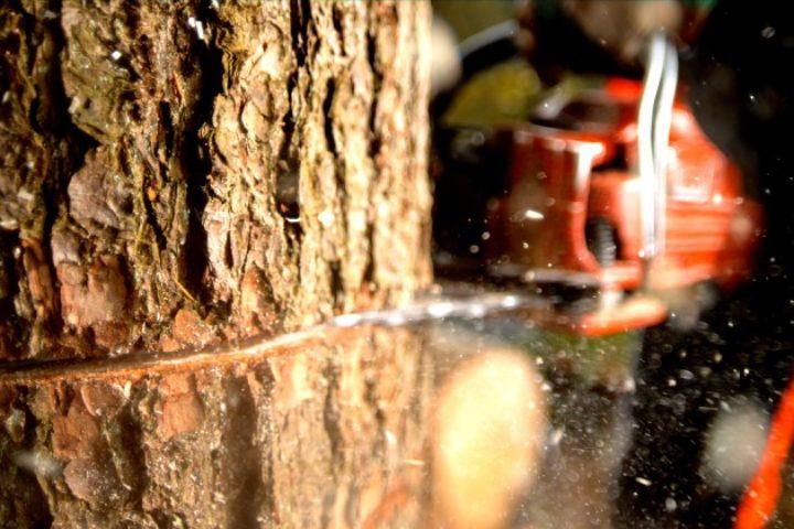 Ulovlig felling av trær – slik når du frem med ditt erstatningskrav