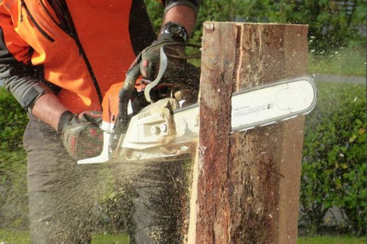 Klient fikk erstatning for ulovlig felling av trær i Kristiansand Tingrett