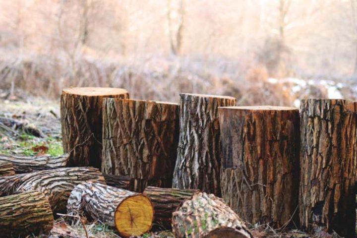 Felling av trær på naboeiendommen