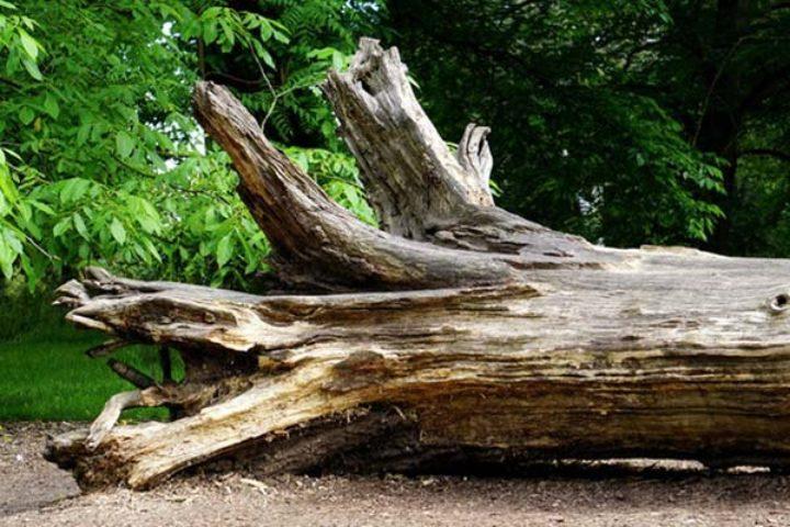Krav om felling av trær – granneloven