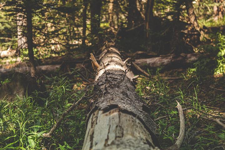 Fjerning av trær og erstatning etter urettmessig fjerning av trær