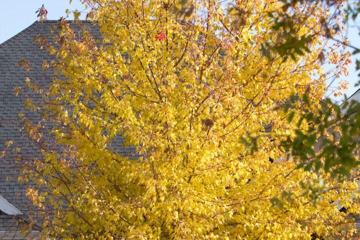 Naborett – Trær som tar utsikt